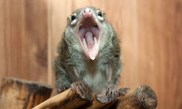 Are YOU a Shrew? Take this Quiz